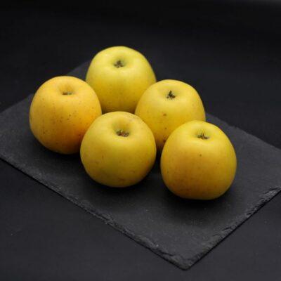 1 kg de pommes opal bio de l'épicerie primeur nos champs occitans à montauban