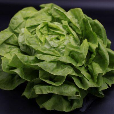 salade laitue de l'épicerie primeur nos champs occitans à montauban