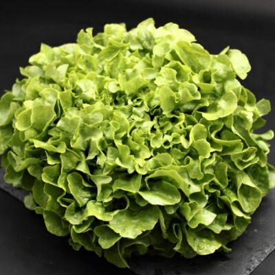 salade feuille de chêne de l'épicerie primeur et drive nos champs occitans à montauban